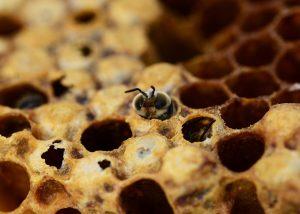 ape che nasce